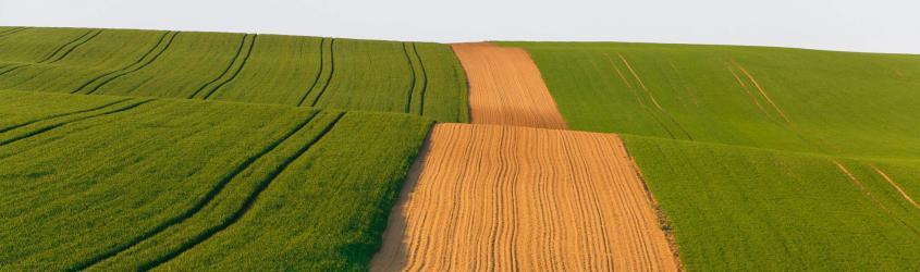 Agroalimentare