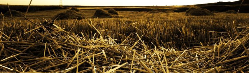 Biomether | Biometano in rete in Emilia-Romagna
