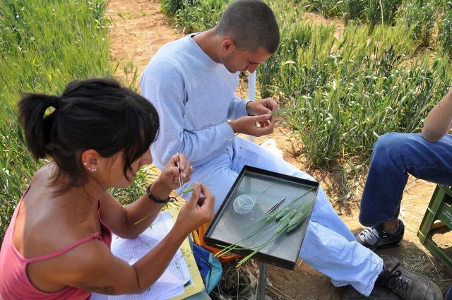 Innovazione e ricerca per il sistema agroalimentare in Emilia-Romagna